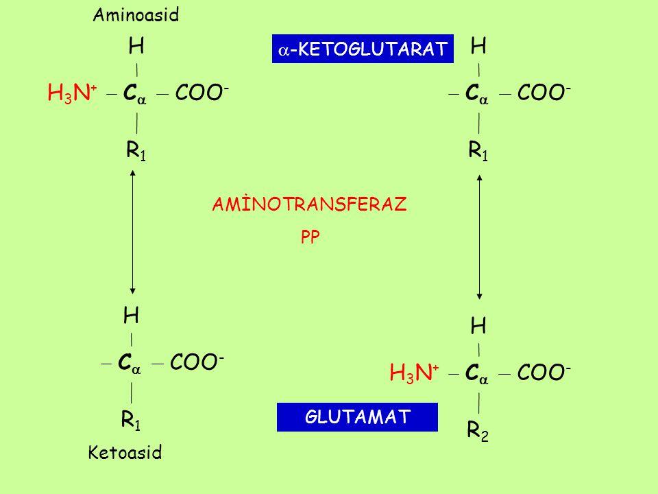 H H3N+H3N+ CC COO - R1R1 H CC R1R1 H H3N+H3N+ CC R2R2 H CC R1R1 AMİNOTRANSFERAZ PP Aminoasid  -KETOGLUTARAT GLUTAMAT Ketoasid