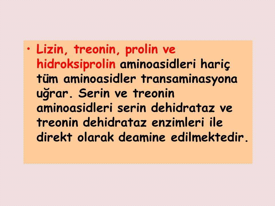 Lizin, treonin, prolin ve hidroksiprolin aminoasidleri hariç tüm aminoasidler transaminasyona uğrar. Serin ve treonin aminoasidleri serin dehidrataz v