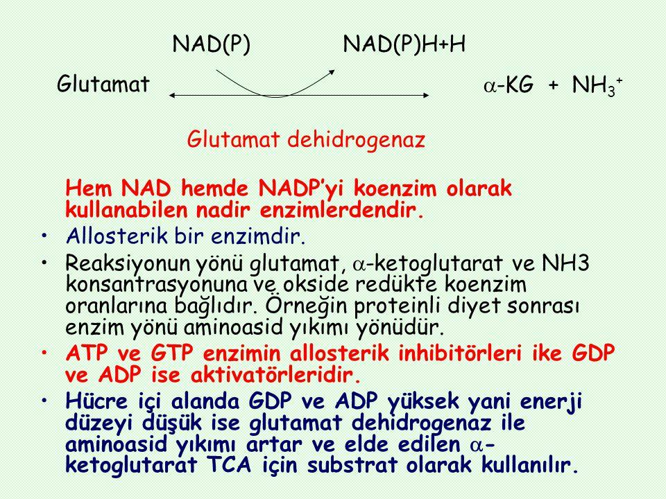 Hem NAD hemde NADP'yi koenzim olarak kullanabilen nadir enzimlerdendir. Allosterik bir enzimdir. Reaksiyonun yönü glutamat,  -ketoglutarat ve NH3 kon