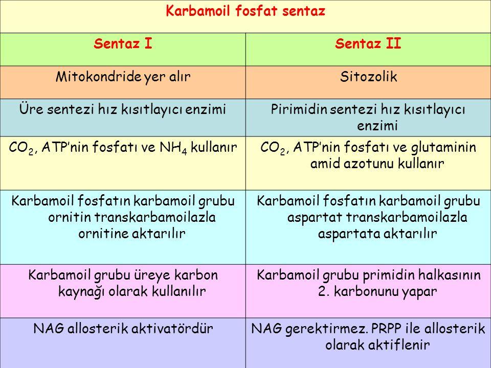 Karbamoil fosfat sentaz Sentaz ISentaz II Mitokondride yer alırSitozolik Üre sentezi hız kısıtlayıcı enzimiPirimidin sentezi hız kısıtlayıcı enzimi CO