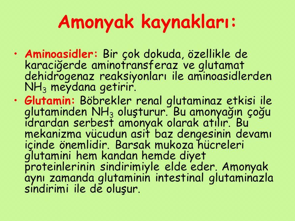 Amonyak kaynakları: Aminoasidler: Bir çok dokuda, özellikle de karaciğerde aminotransferaz ve glutamat dehidrogenaz reaksiyonları ile aminoasidlerden