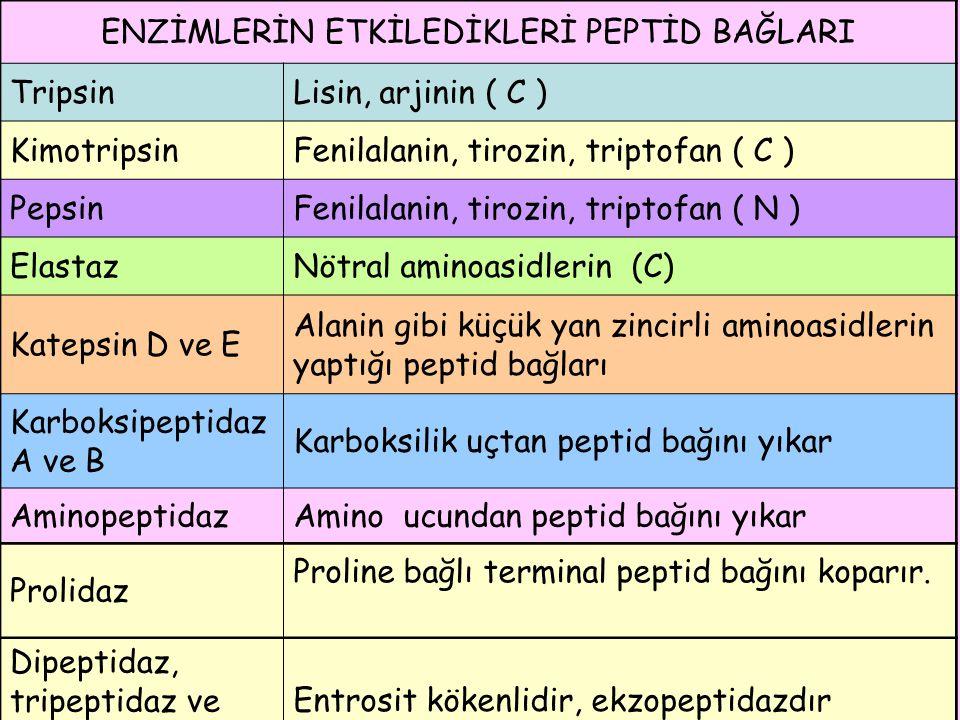ENZİMLERİN ETKİLEDİKLERİ PEPTİD BAĞLARI TripsinLisin, arjinin ( C ) KimotripsinFenilalanin, tirozin, triptofan ( C ) PepsinFenilalanin, tirozin, tript