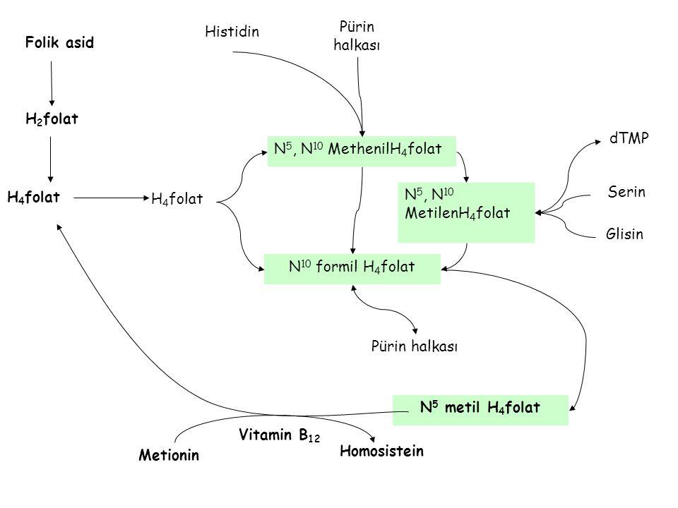 Folik asid H 2 folat H 4 folat N 5, N 10 MethenilH 4 folat N 5, N 10 MetilenH 4 folat Pürin halkası Histidin N 5 metil H 4 folat Vitamin B 12 Metionin