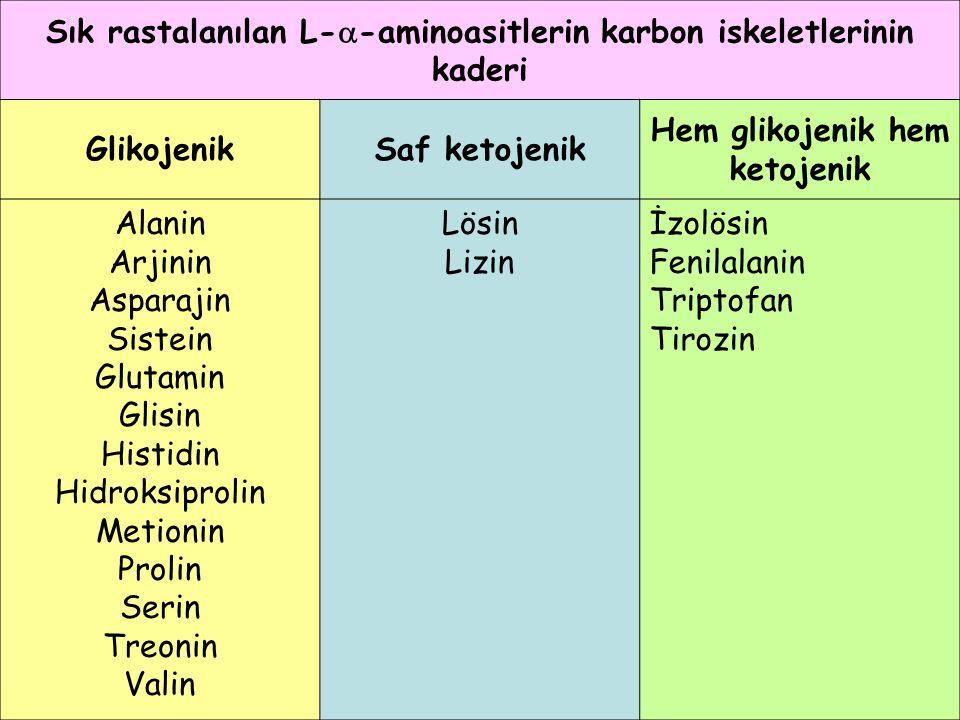 Sık rastalanılan L-  -aminoasitlerin karbon iskeletlerinin kaderi GlikojenikSaf ketojenik Hem glikojenik hem ketojenik Alanin Arjinin Asparajin Siste