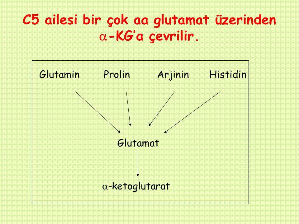 C5 ailesi bir çok aa glutamat üzerinden  -KG'a çevrilir. GlutaminArjininProlinHistidin Glutamat  -ketoglutarat