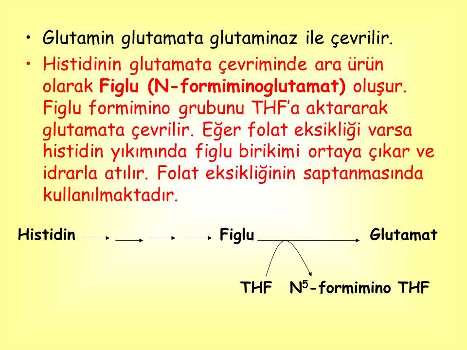 Glutamin glutamata glutaminaz ile çevrilir. Histidinin glutamata çevriminde ara ürün olarak Figlu (N-formiminoglutamat) oluşur. Figlu formimino grubun