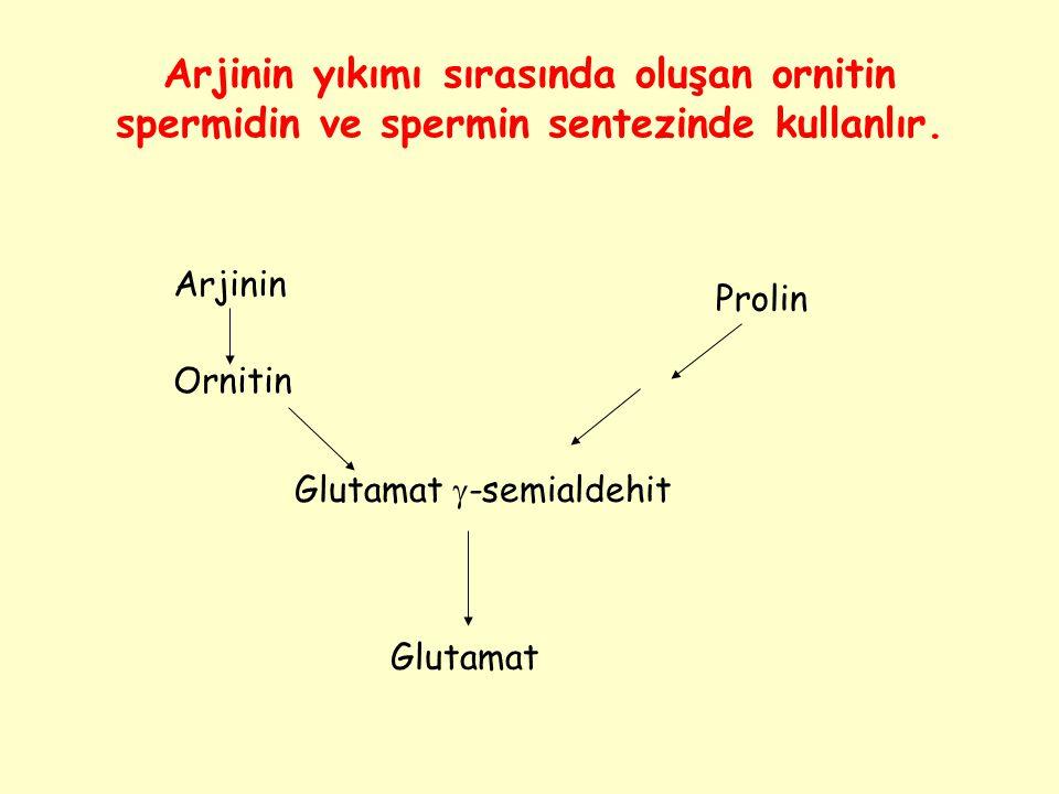 Arjinin yıkımı sırasında oluşan ornitin spermidin ve spermin sentezinde kullanlır. Arjinin Ornitin Prolin Glutamat  -semialdehit Glutamat