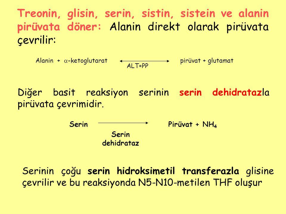 Treonin, glisin, serin, sistin, sistein ve alanin pirüvata döner: Alanin direkt olarak pirüvata çevrilir: Alanin +  -ketoglutaratpirüvat + glutamat A