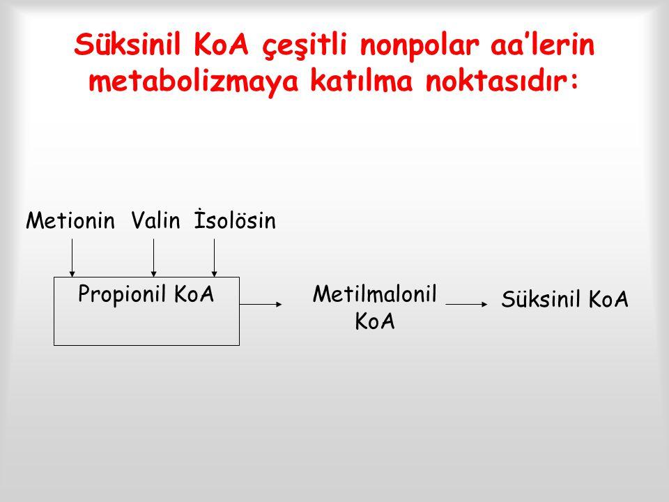 Süksinil KoA çeşitli nonpolar aa'lerin metabolizmaya katılma noktasıdır: Metionin Valin İsolösin Propionil KoA Süksinil KoA Metilmalonil KoA