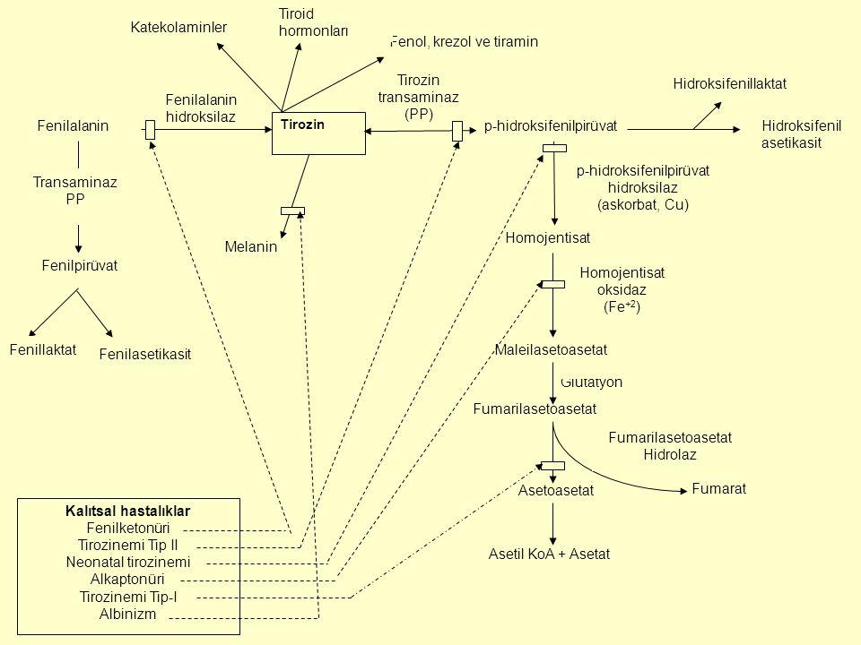 Melanin Fenol, krezol ve tiramin Katekolaminler Hidroksifenillaktat Glutatyon Homojentisat oksidaz (Fe +2 ) Maleilasetoasetat Tirozin transaminaz (PP)