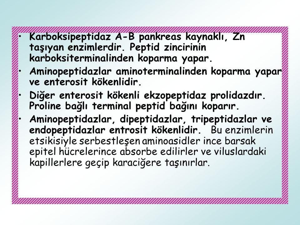 Karboksipeptidaz A-B pankreas kaynaklı, Zn taşıyan enzimlerdir. Peptid zincirinin karboksiterminalinden koparma yapar. Aminopeptidazlar aminoterminali