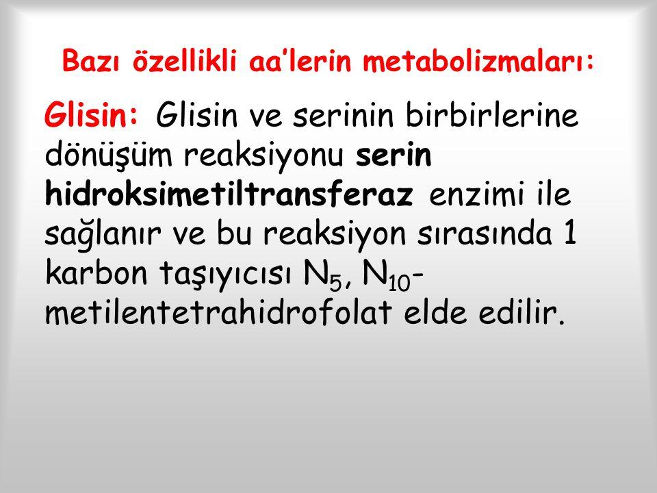 Bazı özellikli aa'lerin metabolizmaları: Glisin: Glisin ve serinin birbirlerine dönüşüm reaksiyonu serin hidroksimetiltransferaz enzimi ile sağlanır v