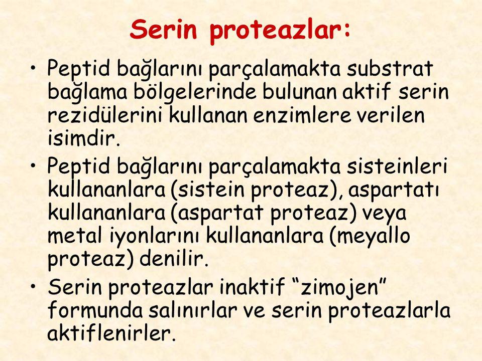 Serin proteazlar: Peptid bağlarını parçalamakta substrat bağlama bölgelerinde bulunan aktif serin rezidülerini kullanan enzimlere verilen isimdir. Pep