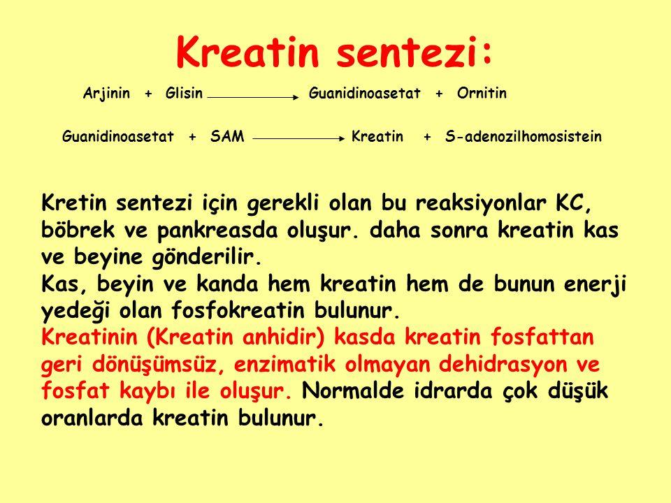Kreatin sentezi: Arjinin + GlisinGuanidinoasetat + Ornitin Guanidinoasetat + SAMKreatin + S-adenozilhomosistein Kretin sentezi için gerekli olan bu re