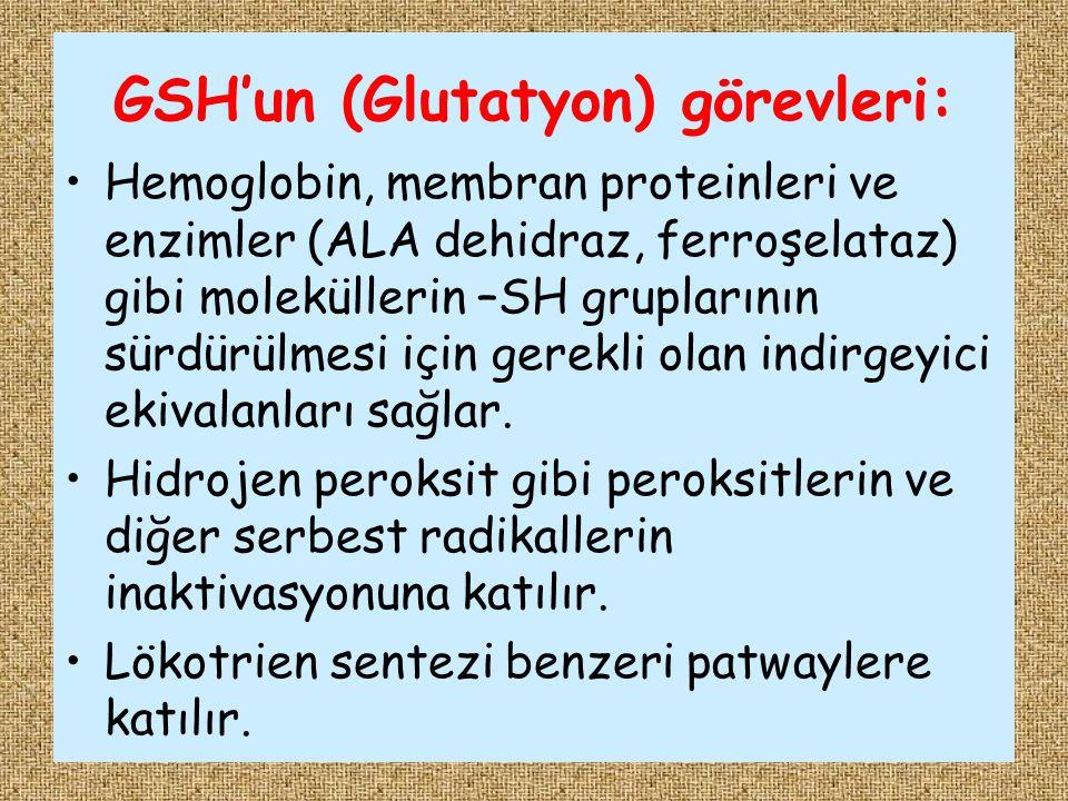 GSH'un (Glutatyon) görevleri: Hemoglobin, membran proteinleri ve enzimler (ALA dehidraz, ferroşelataz) gibi moleküllerin –SH gruplarının sürdürülmesi