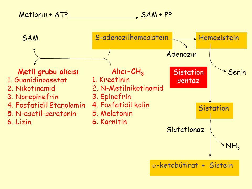 Sistationaz NH 3 Serin Metionin + ATPSAM + PP SAM S-adenozilhomosistein Metil grubu alıcısı 1. Guanidinoasetat 2. Nikotinamid 3. Norepinefrin 4. Fosfa
