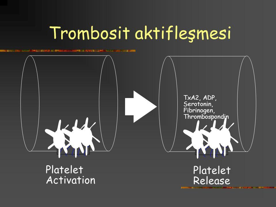 Trombosit aktifleşmesi TxA2, ADP, Serotonin, Fibrinogen, Thrombospondin Platelet Activation Platelet Release
