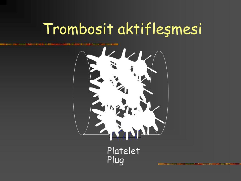 Trombosit aktifleşmesi Platelet Plug