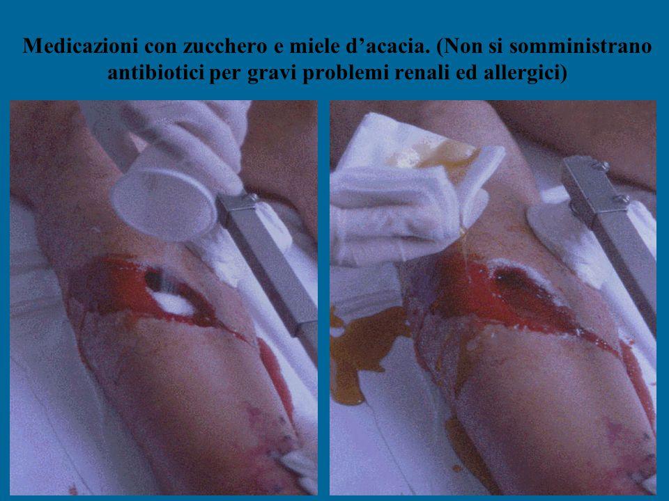 Medicazioni con zucchero e miele d'acacia. (Non si somministrano antibiotici per gravi problemi renali ed allergici)