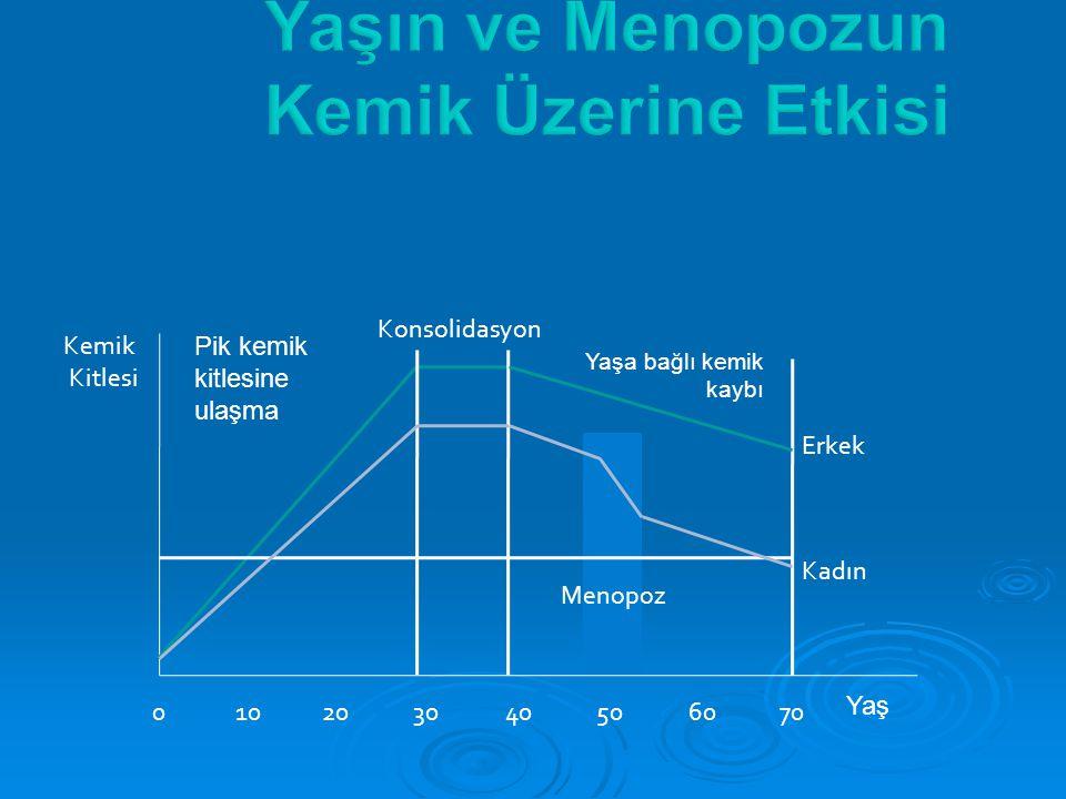 02050 Kemik Kitlesi 1040306070 Erkek Kadın Pik kemik kitlesine ulaşma Konsolidasyon Menopoz Yaşa bağlı kemik kaybı Yaş