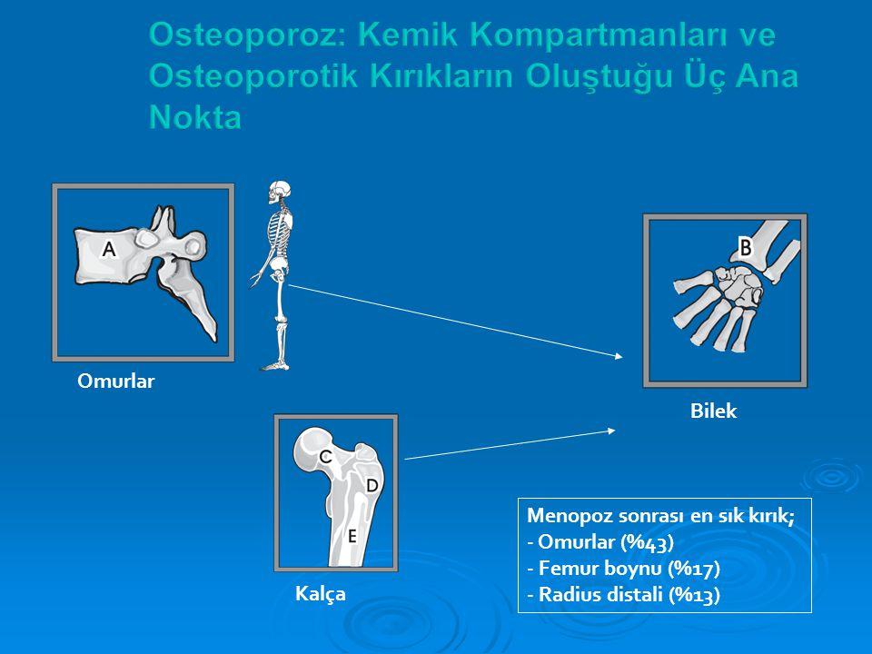 Omurlar Kalça Bilek Menopoz sonrası en sık kırık; - Omurlar (%43) - Femur boynu (%17) - Radius distali (%13)