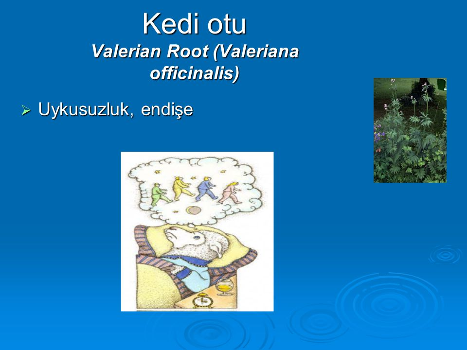 Kedi otu Valerian Root (Valeriana officinalis)  Uykusuzluk, endişe