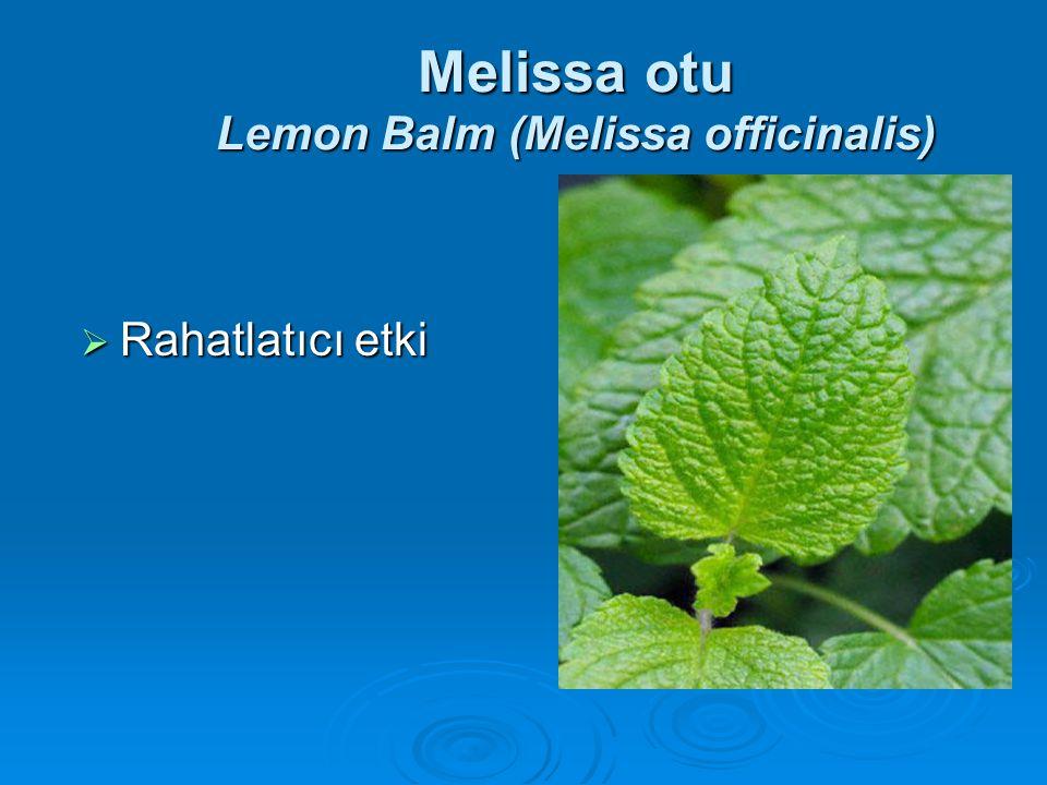 Melissa otu Lemon Balm (Melissa officinalis)  Rahatlatıcı etki