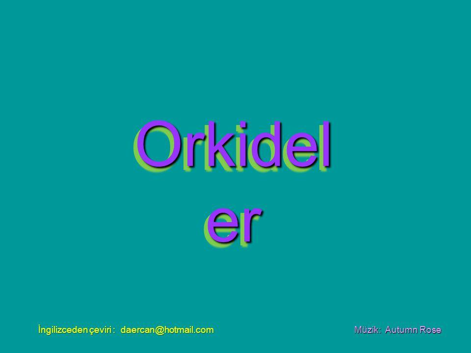 Orkidel er Orkidel er Müzik: Autumn Rose İngilizceden çeviri : daercan@hotmail.com