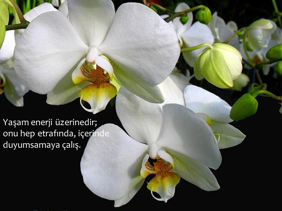 Yaşam enerji üzerinedir; onu hep etrafında, içerinde duyumsamaya çalış.