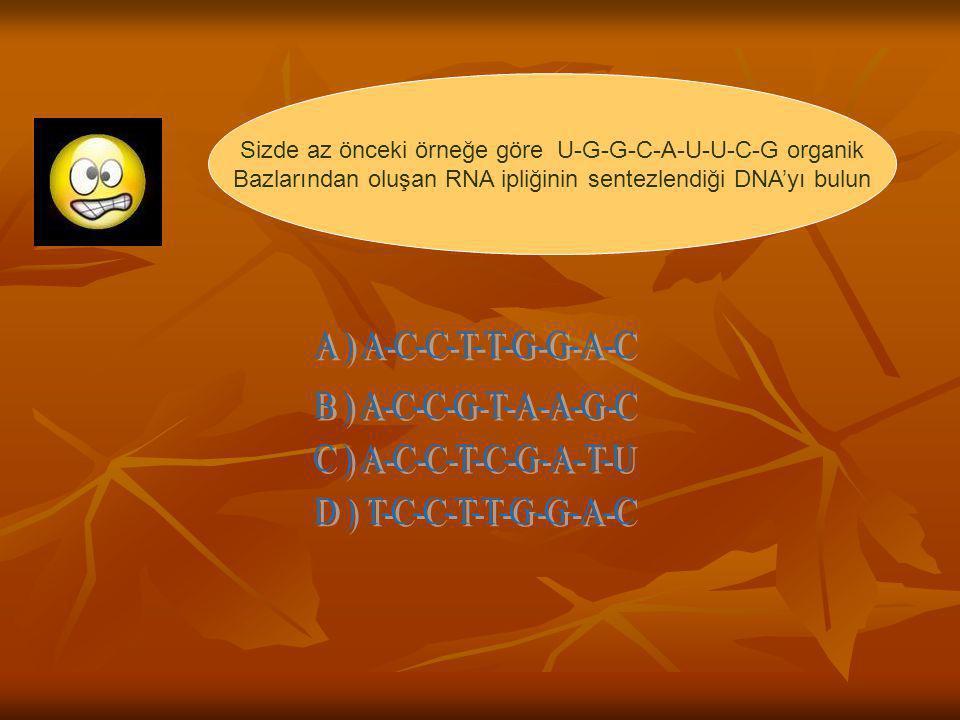 Sizde az önceki örneğe göre U-G-G-C-A-U-U-C-G organik Bazlarından oluşan RNA ipliğinin sentezlendiği DNA'yı bulun
