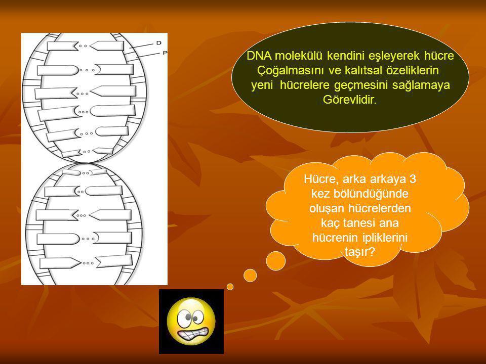 DNA molekülü kendini eşleyerek hücre Çoğalmasını ve kalıtsal özeliklerin yeni hücrelere geçmesini sağlamaya Görevlidir. Hücre, arka arkaya 3 kez bölün