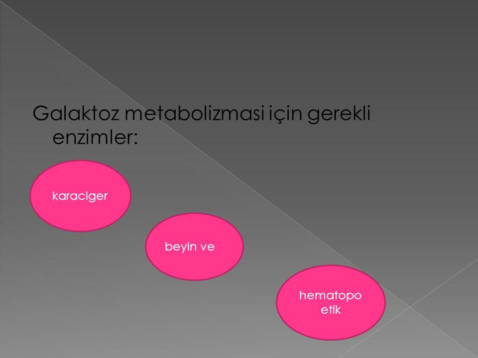 Galaktoz metabolizmasi için gerekli enzimler: karaciger beyin ve hematopo etik