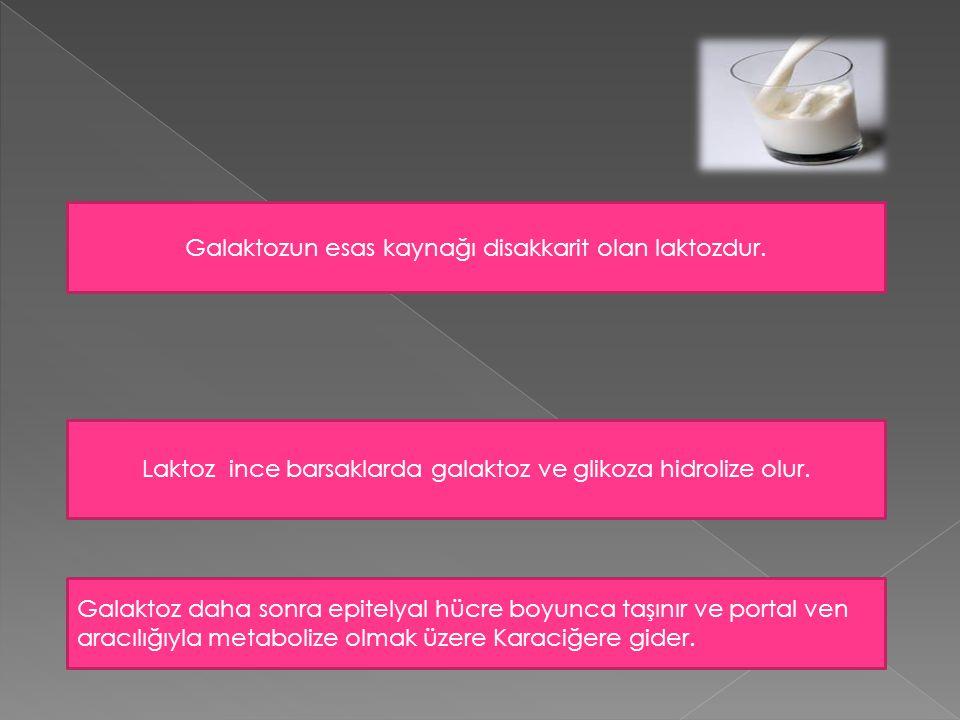 Galaktozun esas kaynağı disakkarit olan laktozdur. Laktoz ince barsaklarda galaktoz ve glikoza hidrolize olur. Galaktoz daha sonra epitelyal hücre boy