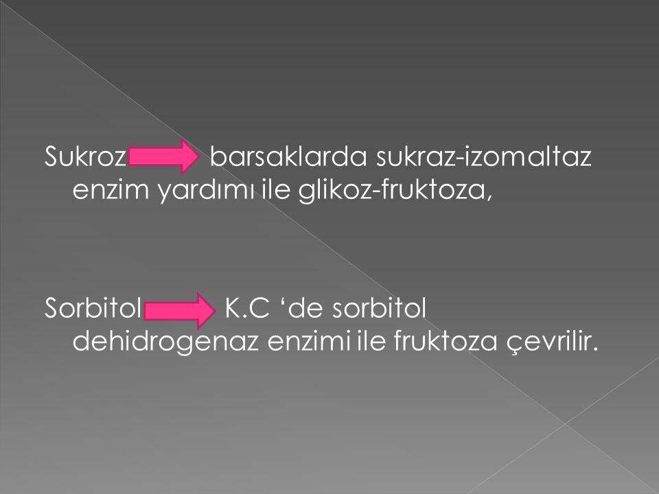 Sukroz barsaklarda sukraz-izomaltaz enzim yardımı ile glikoz-fruktoza, Sorbitol K.C 'de sorbitol dehidrogenaz enzimi ile fruktoza çevrilir.