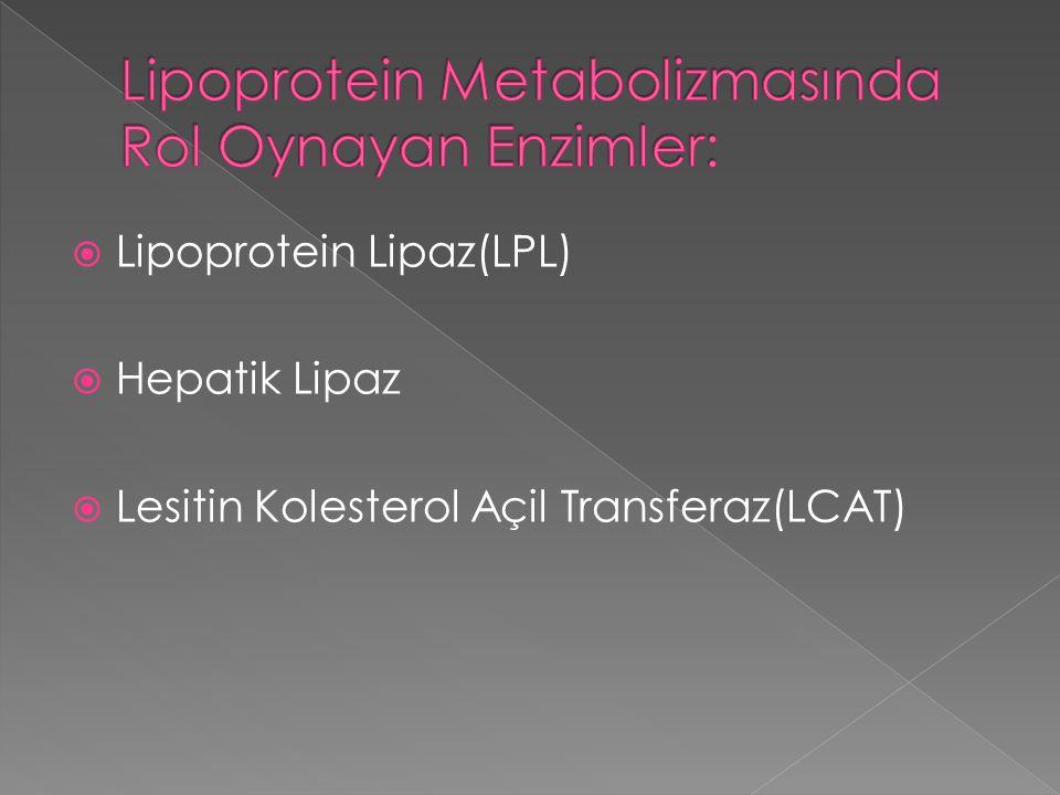  Lipoprotein Lipaz(LPL)  Hepatik Lipaz  Lesitin Kolesterol Açil Transferaz(LCAT)
