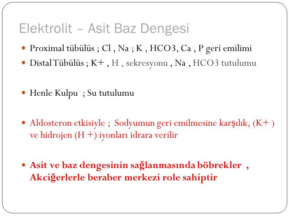 Metabolik Ürünlerin Atılımı Metabolizmanın son ürünleri C ve N bazlı ürünledir.