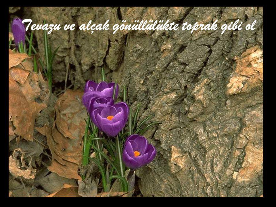 Tevazu ve alçak gönüllülükte toprak gibi ol