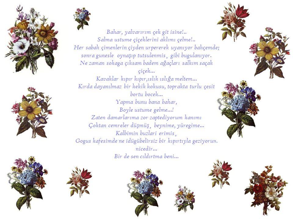 Bahar, yalvarırım çek git isine!.. Salma ustume çiçeklerini aklımı çelme!.. Her sabah çimenlerin çiyden urpererek uyanıyor bahçemde; sonra gunesle oyn