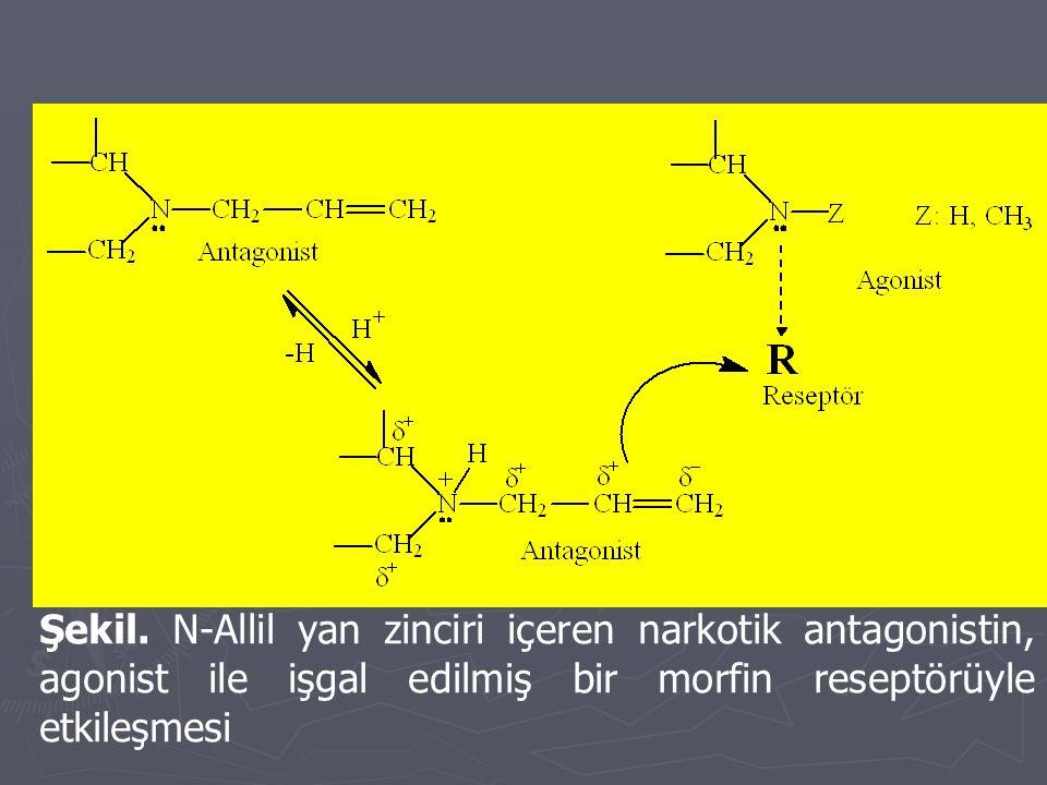 Şekil. N-Allil yan zinciri içeren narkotik antagonistin, agonist ile işgal edilmiş bir morfin reseptörüyle etkileşmesi