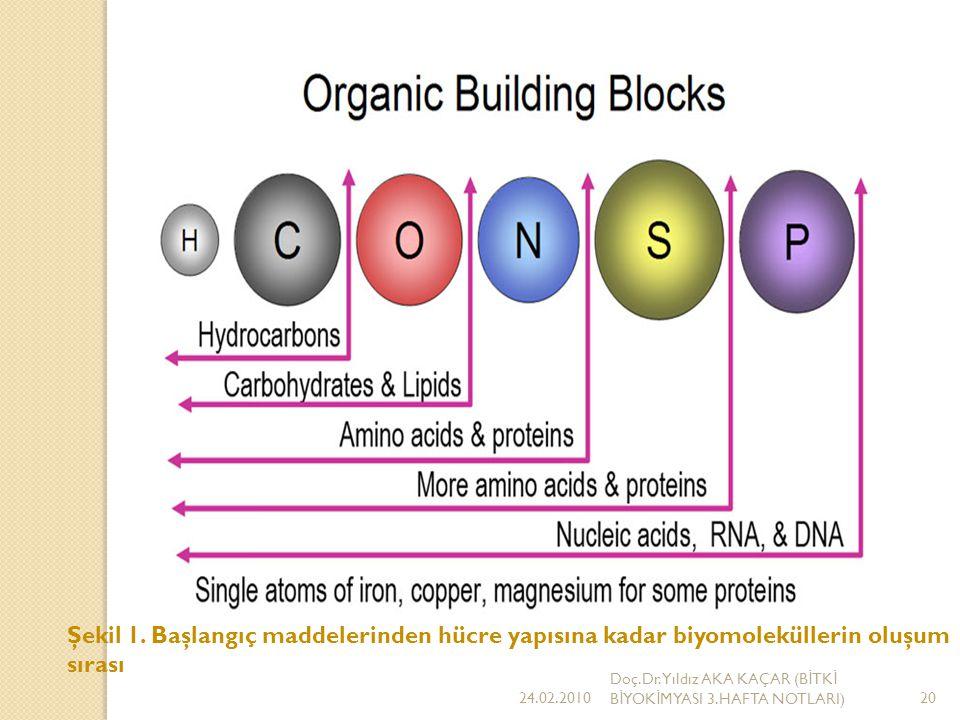 CANLILARDA MOLEKÜLLER Aminoasitler proteinleri, mononükleotidler nükleik asitleri, monosakkaritler polisakkaritler yağ asitleri de bazı lipitleri meydana getirirler.