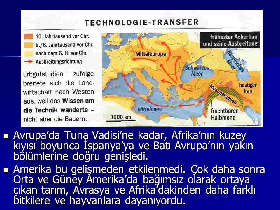 Avrupa'da Tuna Vadisi'ne kadar, Afrika'nın kuzey kıyısı boyunca İspanya'ya ve Batı Avrupa'nın yakın bölümlerine doğru genişledi. Avrupa'da Tuna Vadisi