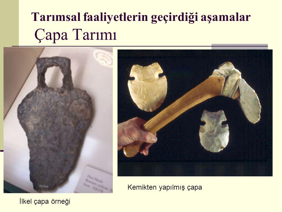 Tarımsal faaliyetlerin geçirdiği aşamalar Çapa Tarımı İlkel çapa örneği Kemikten yapılmış çapa