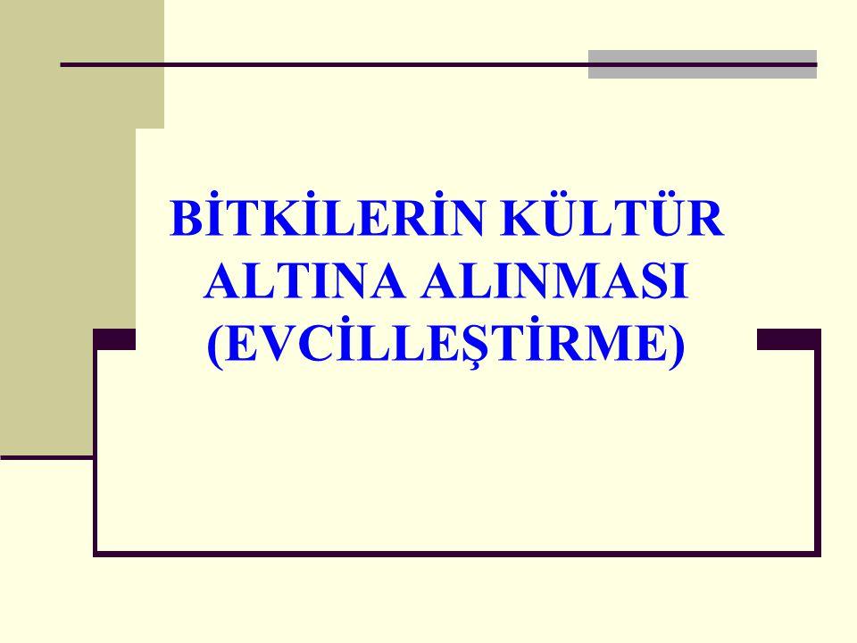 BİTKİLERİN KÜLTÜR ALTINA ALINMASI (EVCİLLEŞTİRME)