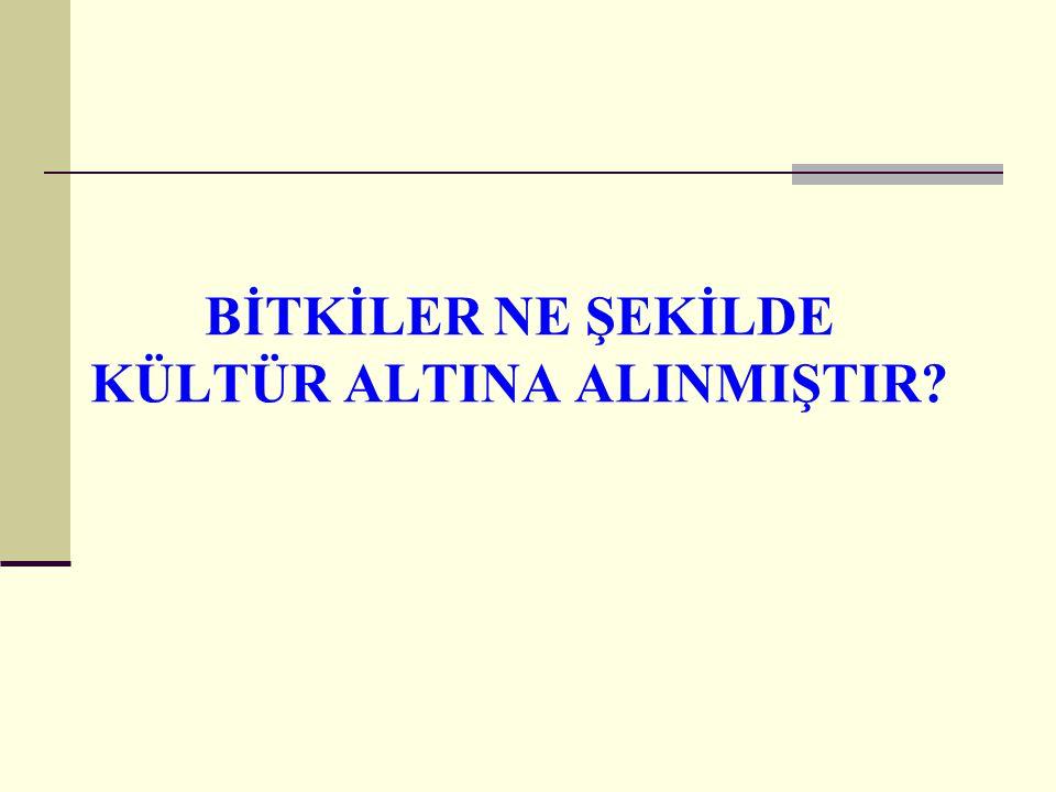 BİTKİLERİN KÜLTÜR ALTINA ALINMASI NE ŞEKİLDE YAPILMIŞTIR.