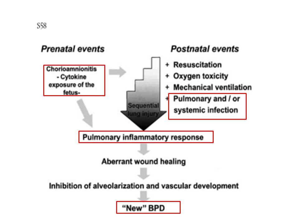 BPD gelişmeyen olgular ile karşılaştırıldığında, BPD gelişen olguların TAS örneklerinde nötrofiller üzerinde artmış CD11b/CD18 ekspresyonu olduğunu bildirilmiştir.