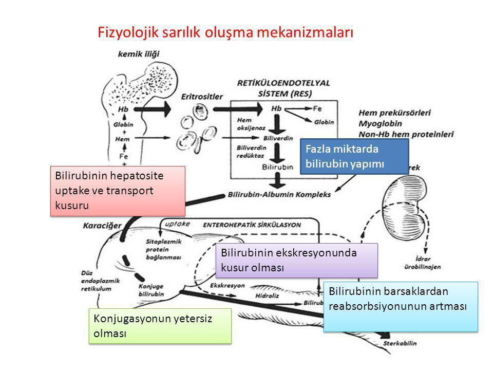 İndirek hiperbilirubinemi Direk hiperbilirubinemi – İndirek hiperbilirubinemi(en sık) Patolojik olmayan – Fizyolojik sarılık – Anne sütü sarılığı Patolojik olan SINIFLANDIRMASI
