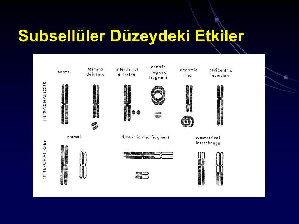 Deterministik Etkiler Normal doku hasarı için eşik dozlar (2Gy/fr) OrganHasra tipi Doz (Gy) 1-5% komplikasyon DeriEritem> 30 kalıcı epilasyon40 - 60 İnce barsakİnflamasyon, oklüzyon45 Rektuminflamasyon, oklüzyon55 KaraciğerFonksiyon kaybı, ascites30 Tükürük beziatrofi, nekroz50 -70 BöbreklerNefrosklerozis23 İdrar yollarıİnflamasyon, obstruksiyon55 -60