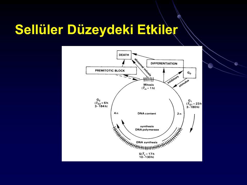 Onarılabilen DNA hasarları olan hücrelerde bir kaç bölünme sonucunda ortadan kalkan bir mitotik gecikme gözlenir Radyobiyolojide hücre ölümü proliferasyon kapasitelerini kaybeden hücrelerin durumunu anlatmak için kullanılır (reprodüktif ölüm)