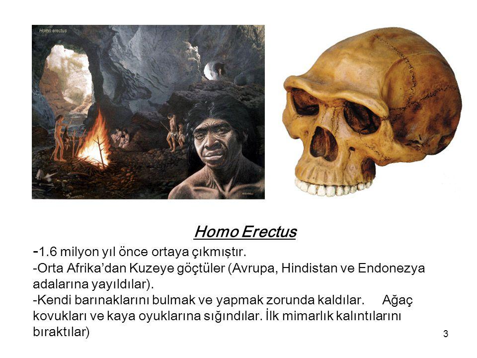 3 Homo Erectus - 1.6 milyon yıl önce ortaya çıkmıştır. -Orta Afrika'dan Kuzeye göçtüler (Avrupa, Hindistan ve Endonezya adalarına yayıldılar). -Kendi