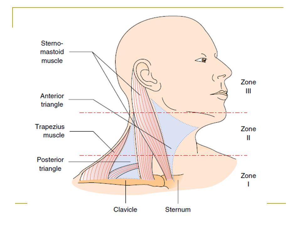 Mezenter arterler 1.